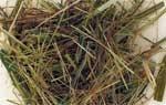 Mariengras (Hierochloe odorata) - 50 g