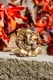 Ganesha - Messing, 6 cm