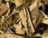Yerba Santa (Eriodictyon californicum) - reine Räucherware